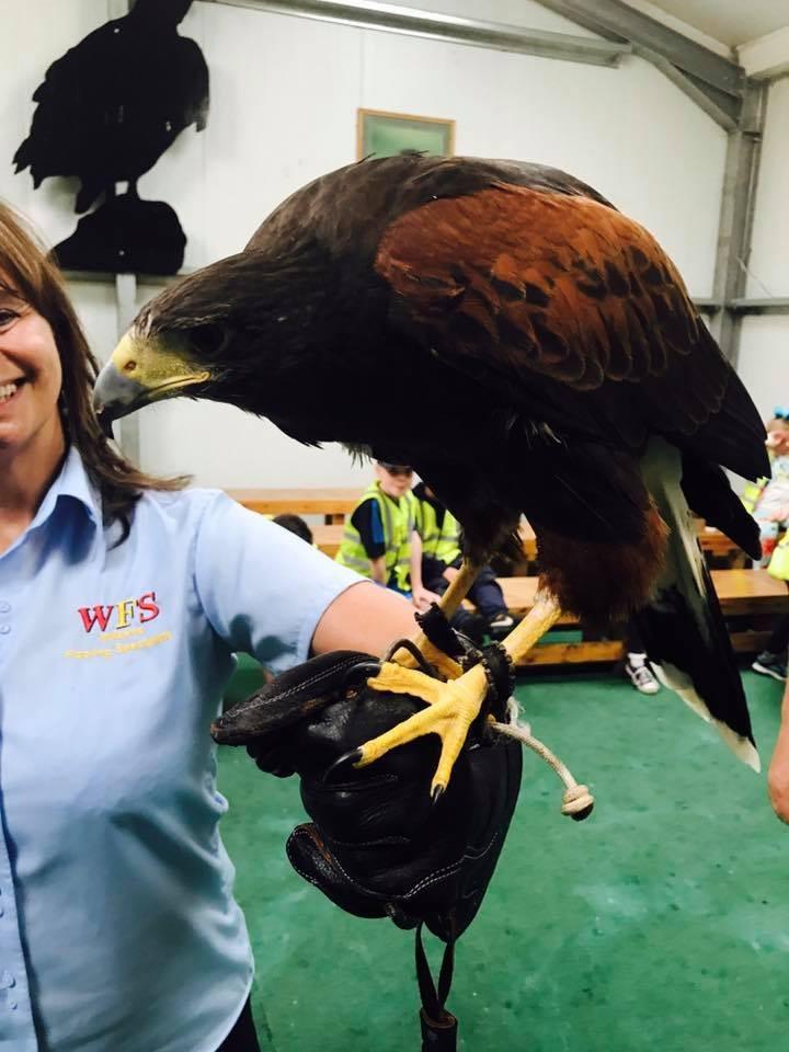 director of wilson's flooring specialists holding a bird of prey